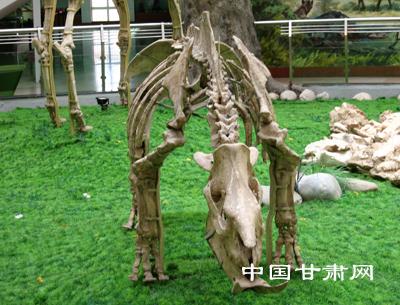和政古动物化石欣赏--中国甘肃网